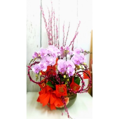 8 Stems Pink Color Phalaenopsis Orchid